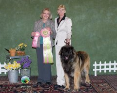 Danzig - Best in Sweeps Puppy